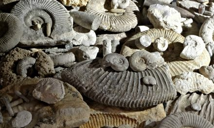 Fossil Hunting on Jurassic Coast
