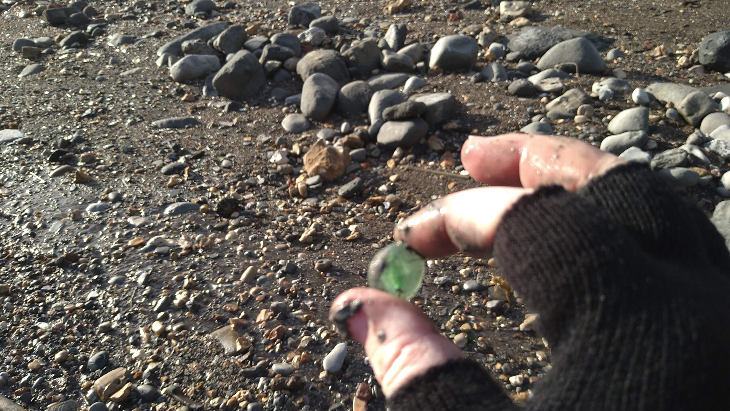 beachcombing finds (105)