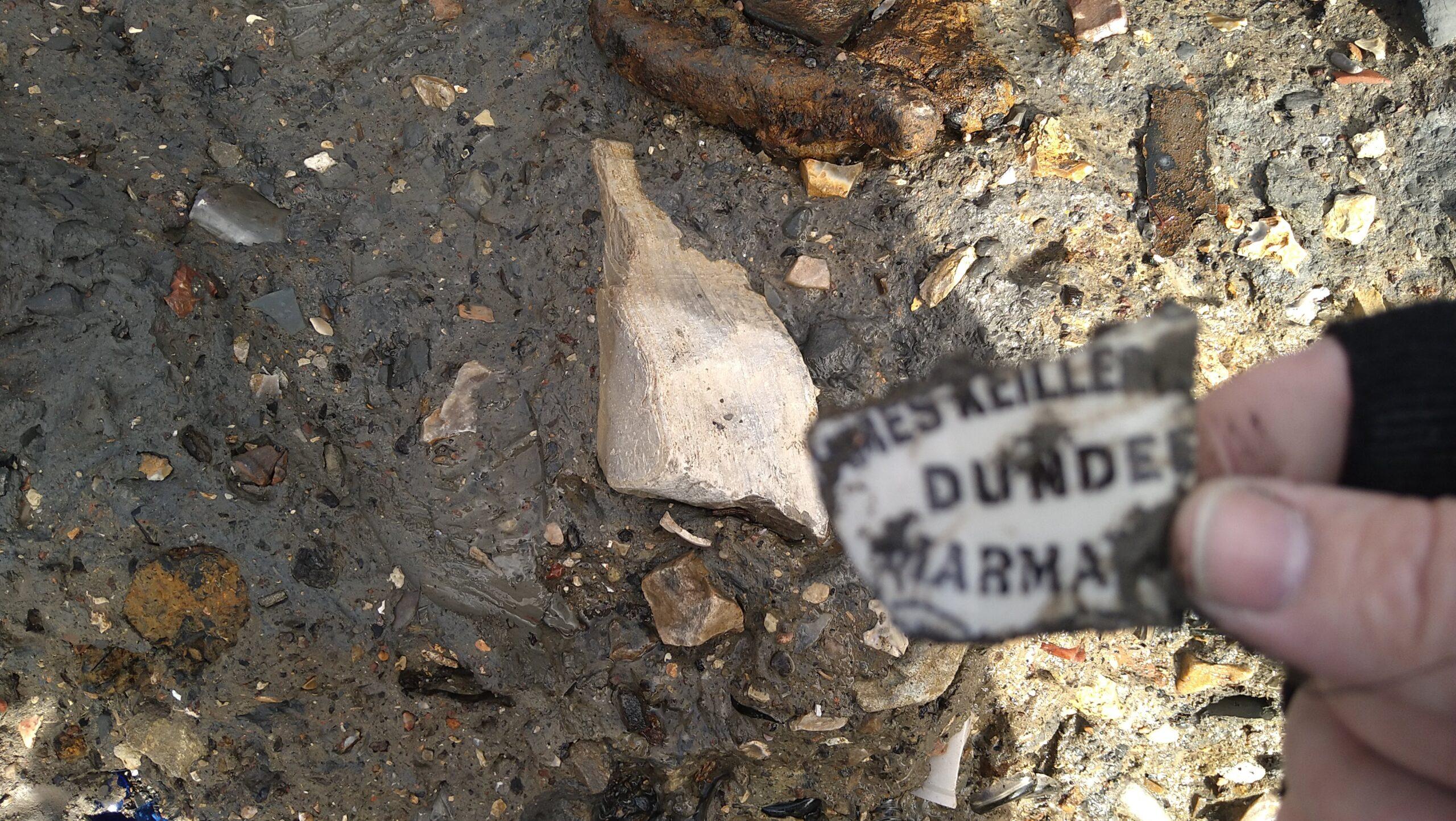 beachcombing finds (114)