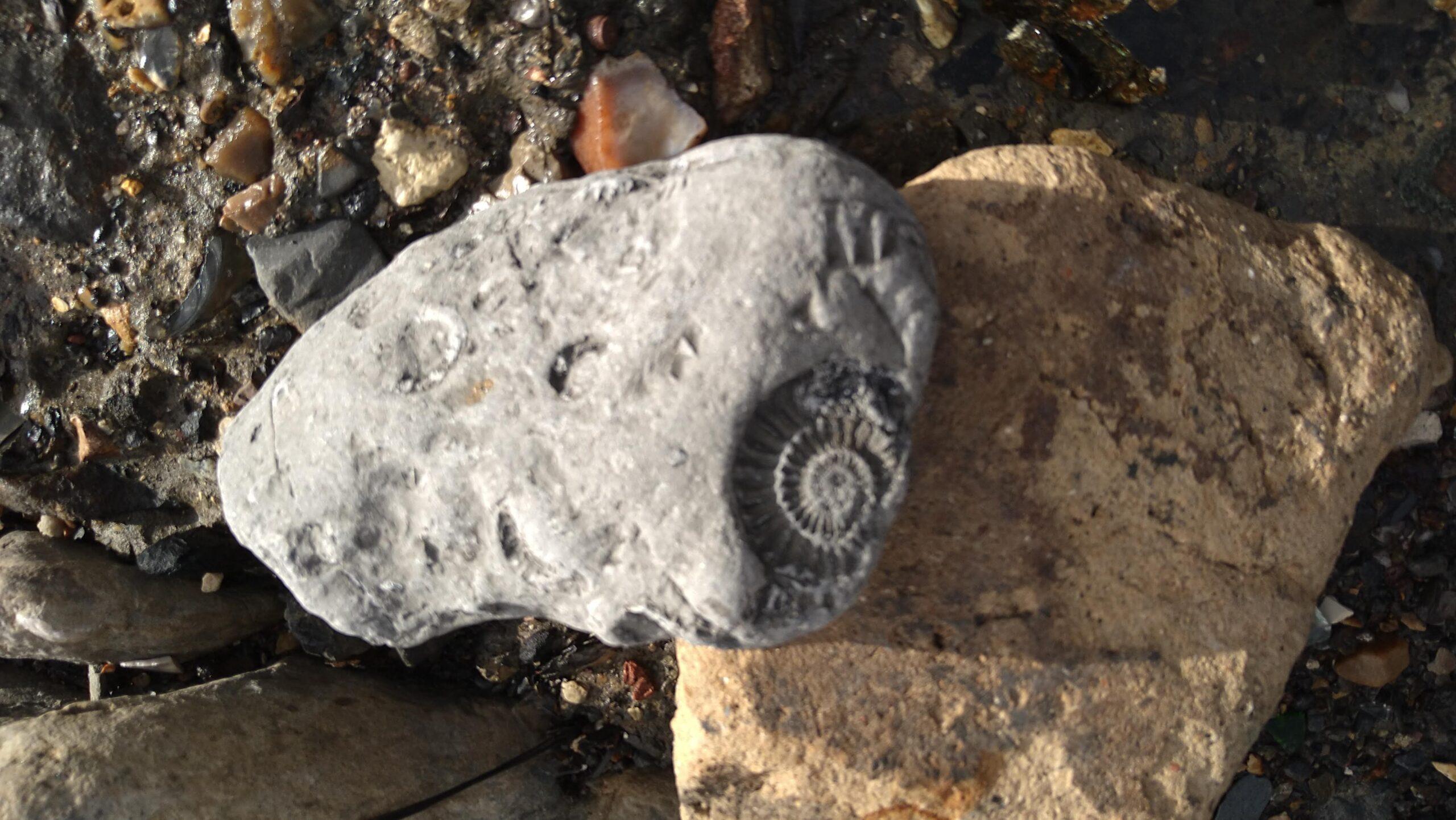 beachcombing finds (116)