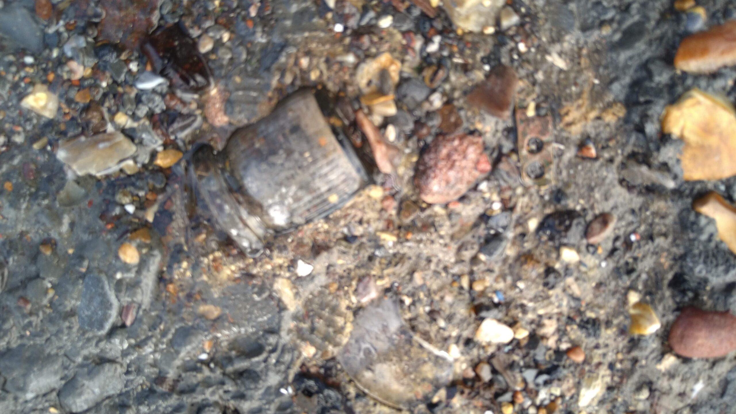 beachcombing finds (118)