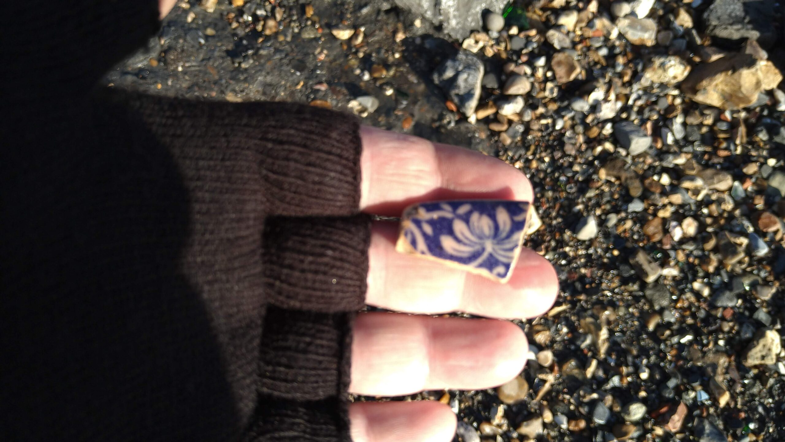 beachcombing finds (129)