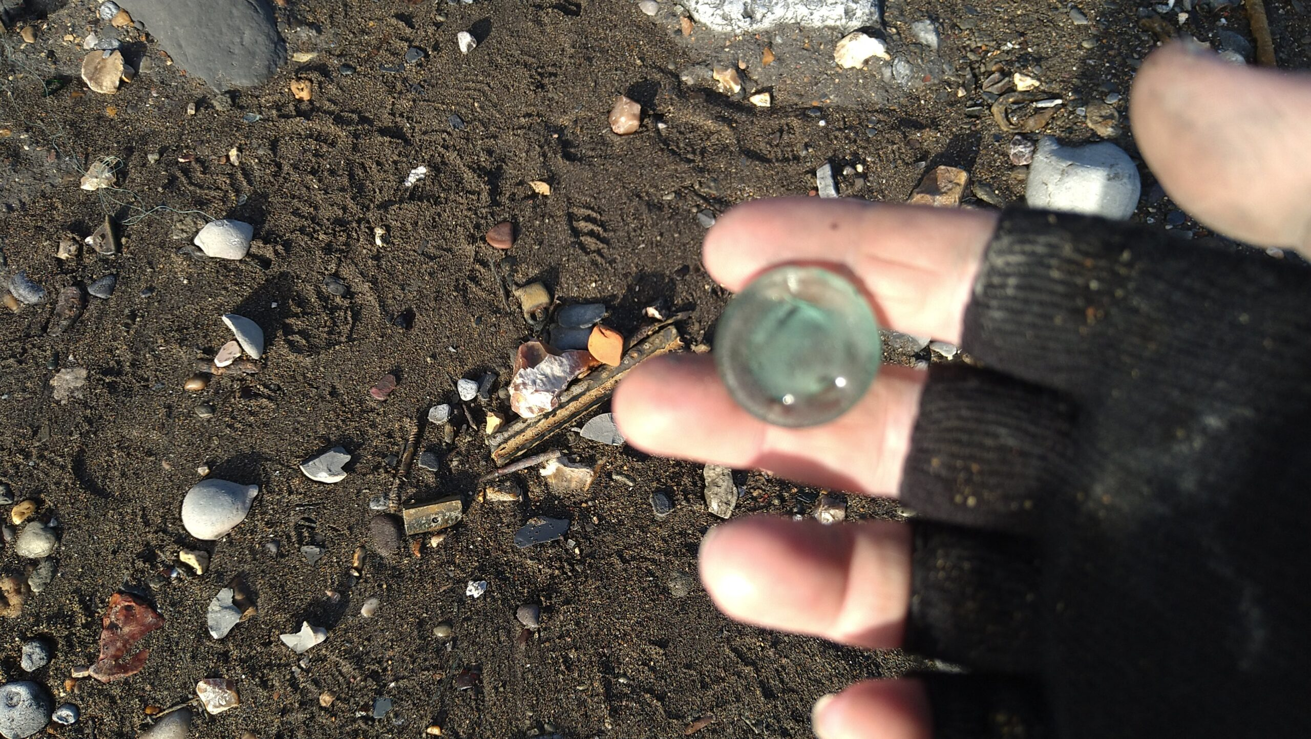 beachcombing finds (139)