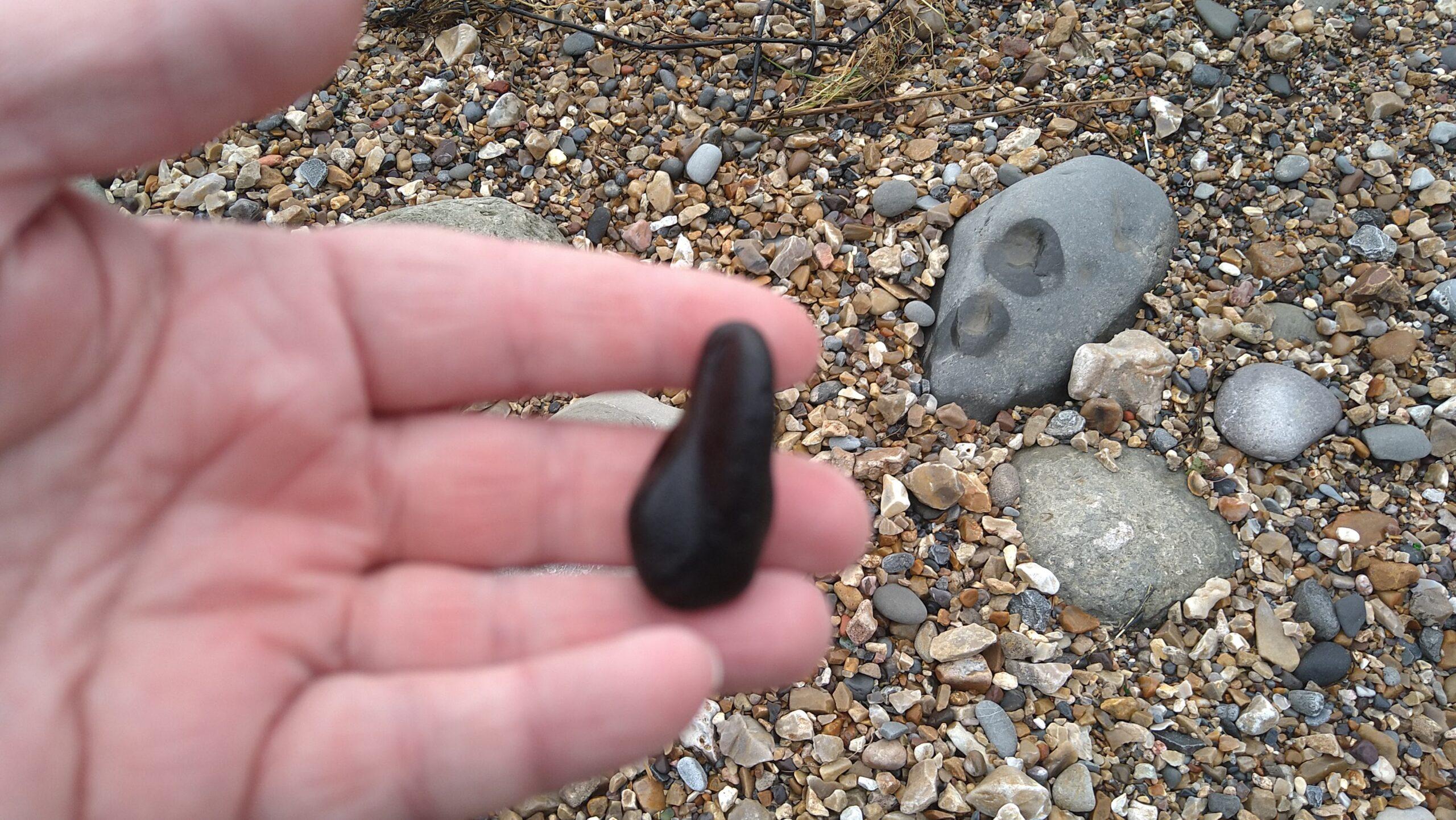 beachcombing finds (51)