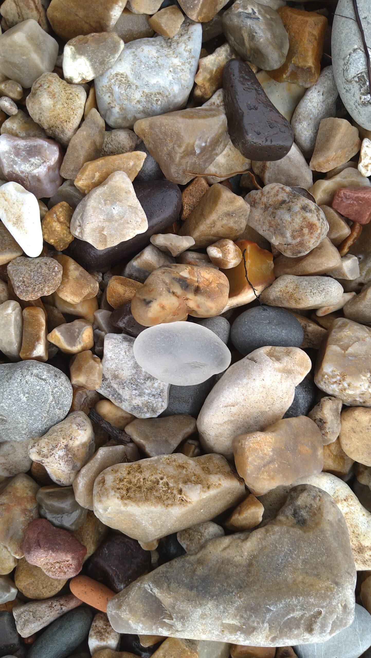 beachcombing finds (68)